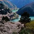 Photos: 「静粛の春。」