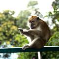 写真: 猿