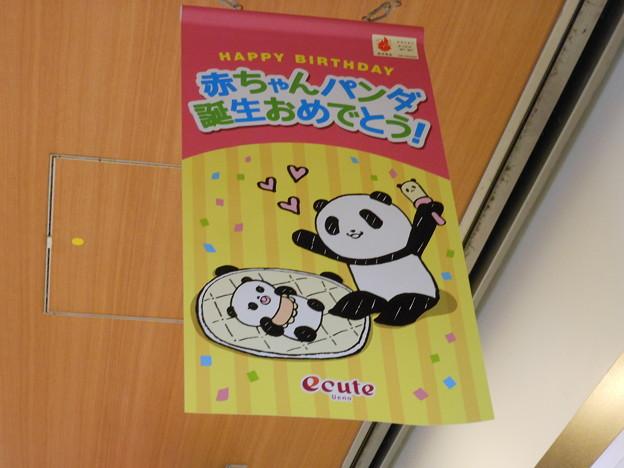 上野駅構内*パンダの赤ちゃん、誕生おめでとー♪