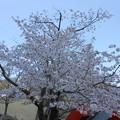 2018*東京ミッドタウンの桜2
