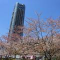 2018*東京ミッドタウンの桜6