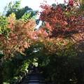 Photos: 京都・高台寺近くの紅葉