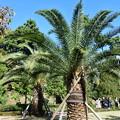 Photos: 皇居・二の丸公園のフェニックス