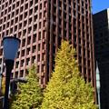 Photos: 丸の内・高層ビルと紅葉