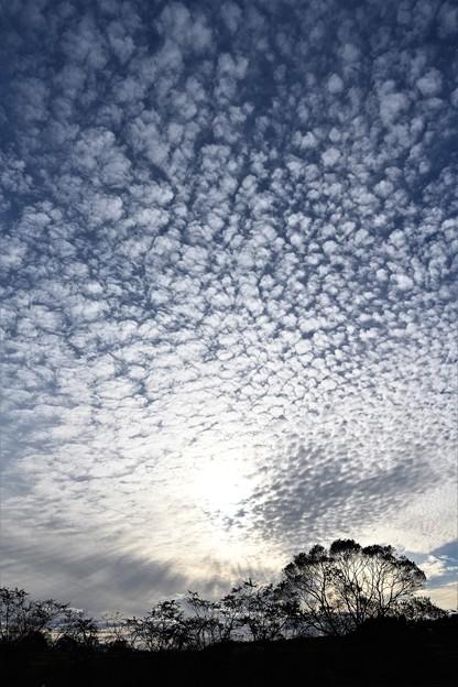 鱗雲に陽射す