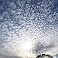 写真: 鱗雲に陽射す