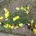 Photos: 整備された花