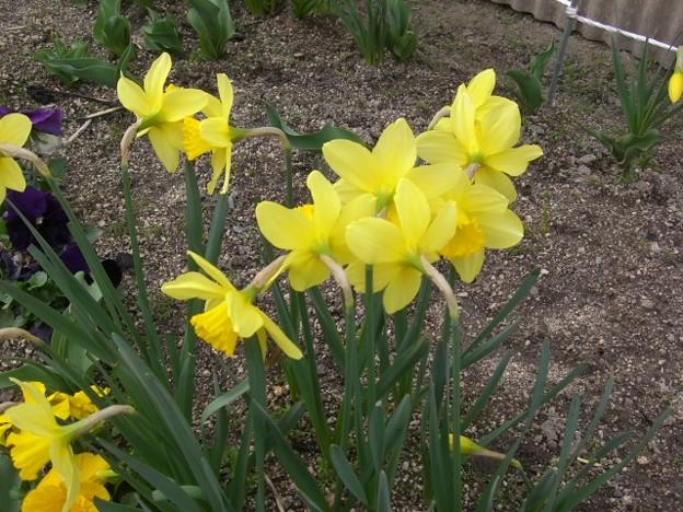 Photos: 花壇の奇麗な花