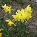 花壇の奇麗な花