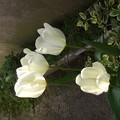 Photos: 花壇に咲いた花