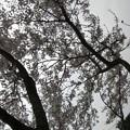 Photos: 公園の街路樹