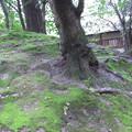 Photos: 公園のコケ