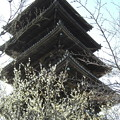 Photos: 塔と春