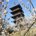 Photos: 国分寺