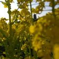 吉備路の春