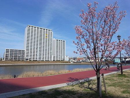 汐入公園の桜(2009/3/29)
