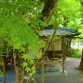 青もみじ 福寿園