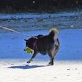 写真: 犬は喜び~♪