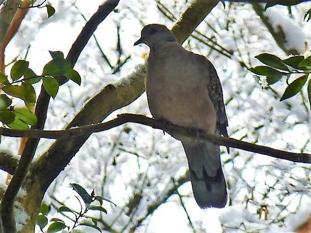 蓮華寺にいた野鳥