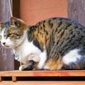 写真: 参道にいた猫