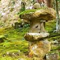 Photos: 苔むす庭園