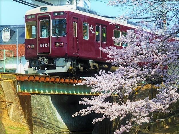 阪急マルーンと桜