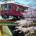Photos: 阪急マルーンと桜