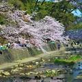 Photos: 花見の名所
