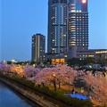 桜の名所  桜ノ宮