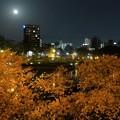 写真: 月の光