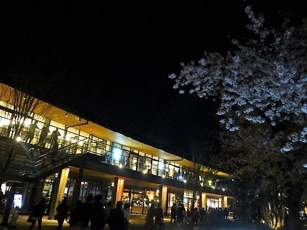 JO-TERRACE OSAKAと夜桜