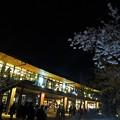 写真: JO-TERRACE OSAKAと夜桜