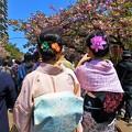 Photos: 着物でお花見
