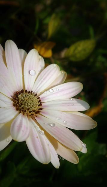 花も涼しく