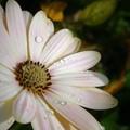 Photos: 花も涼しく