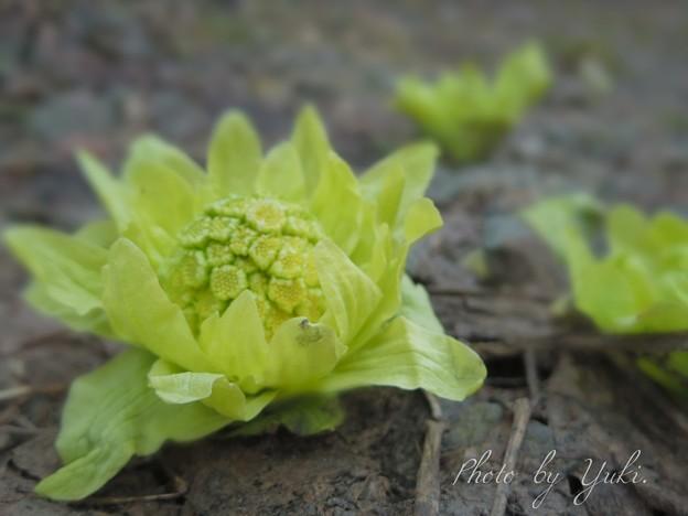 写真: Spring has come(*˘?˘*).。.:*?
