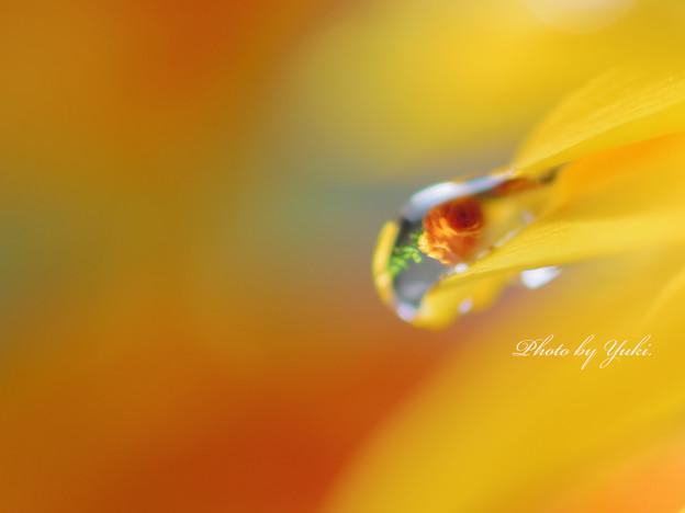 Photos: art of drop