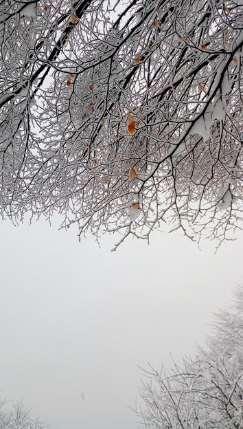 まだ雪積もる。