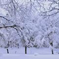 わっさり雪