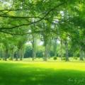 Photos: 夏の緑