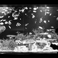 写真: fish