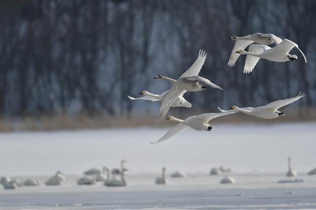 湖面を飛び立つ・・