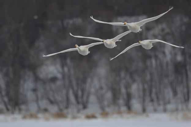 湖面から、飛翔・・