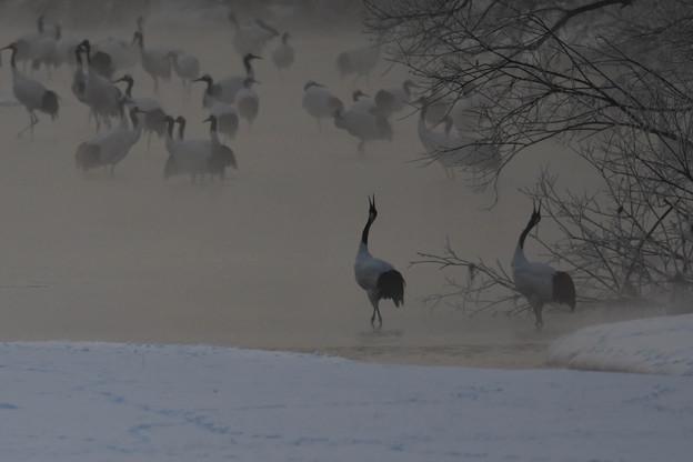 川霧の中・・07:25、これから始動します。