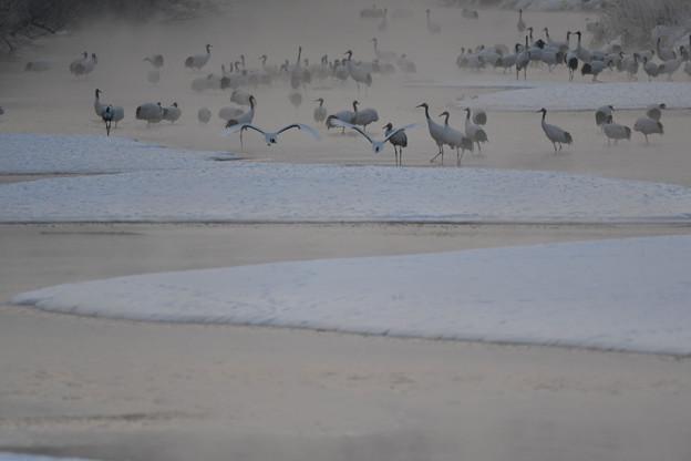 07:24、川霧のたつ釧路川水系・・