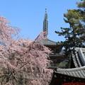 写真: 醍醐寺