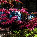Photos: 南禅寺天授庵_134