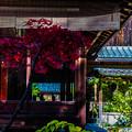 Photos: 南禅寺天授庵_149