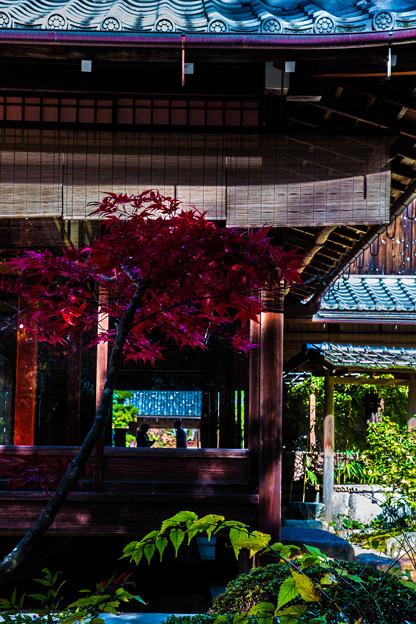 Photos: 南禅寺天授庵_148