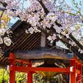 Photos: 2018 03 車折神社_024